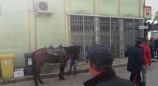 Pitbull azzanna un cavallo che fugge per le strade del paese: ferito il giovane al galoppo