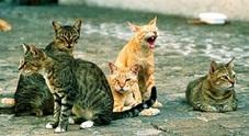 Bocconi avvelenati alla colonia felina: 2 gatti morti e 3 salvati in extremis