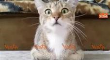 Gatto guarda il film horror, le sue buffe espressioni conquistano il web