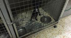Cuccioli di cani e fauna protetta in stato di maltrattamento: chiusa uccelleria nel Napoletano