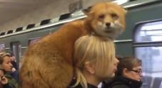 Sorpresa in banchina, la ragazza prende la metro con una volpe sulle spalle