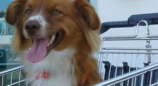 Al supermercato i carrelli per  i cani ma non i per disabili