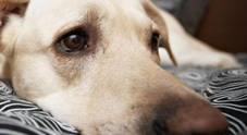 Campania, arriva il registro tumori per gli animali di affezione