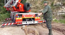 Segugio rincorre lepre sul monte  e resta bloccato, salvato dai pompieri