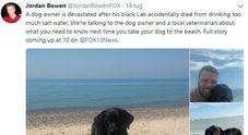 Beve acqua di mare, labrador muore sotto gli occhi del padrone dopo il giro in spiaggia