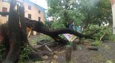 Violento temporale: scantinati allagati, alberi e piloni abbattuti