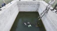 Mamma orsa e due cuccioli annegano in una vasca nel Parco nazionale d'Abruzzo