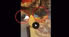 Venezia. I piccioni zompettano sopra la pizza in vendita nel locale