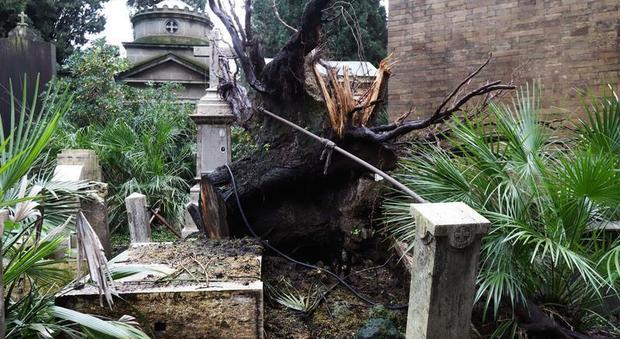 Il cimitero del Verano abbandonato nel degrado