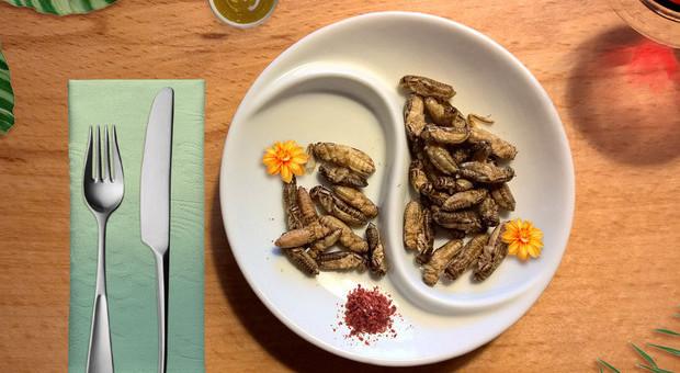 Dall'Europa via libera insetti nel piatto, ma in Italia ancora nessun permesso