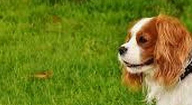 Impicca il cagnolino della ex, «non mi devi denunciare». Condannato anche in appello