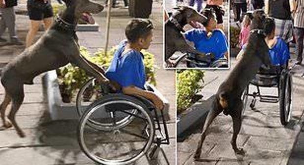 Il cane spinge il padroncino sulla carrozzina per aiutarlo a muoversi: il video commovente