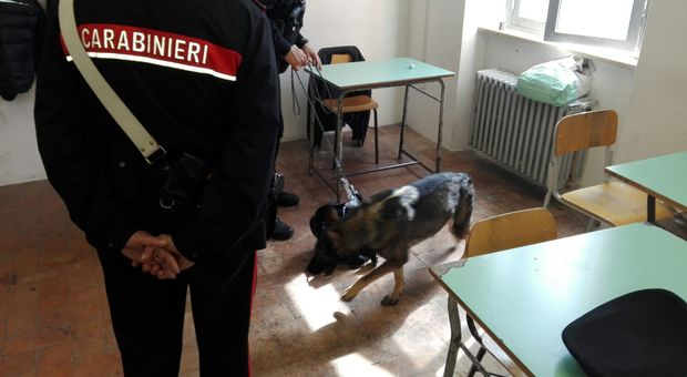 Un cane antidroga fra i banchi di una scuola