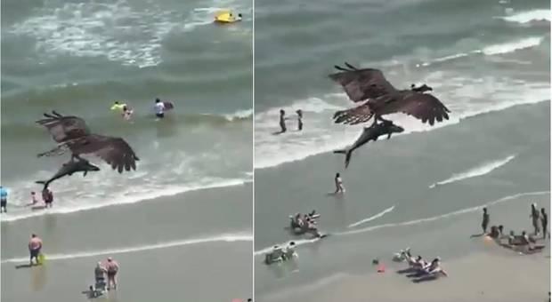 Aquila cattura lo squalo e sorvola la spiaggia piena di bagnanti. Le incredibili immagini riprese in un video. (immagini diffuse da Ed Piotrowski WPDE su Fb)