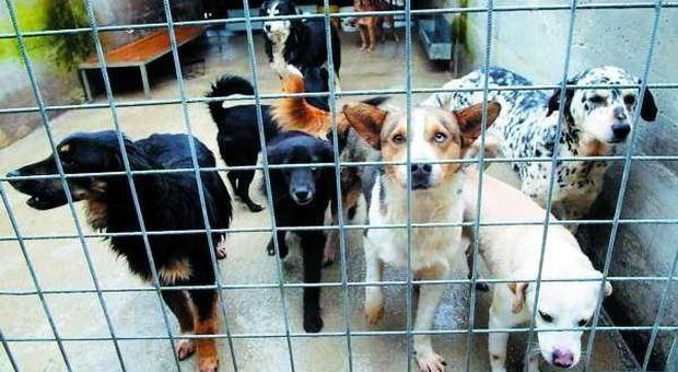 ABBANDONATI Il canile abusivo di Ca' Rainati è stato chiuso e ora sono una cinquantina gli animali di compagnia che cercano una nuova famiglia (foto d'archivo)