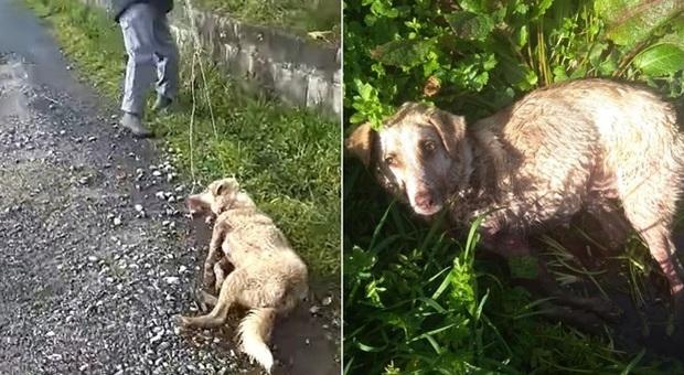 Spara al cane trascinandolo in strada: «Sono cacciatore, sparo a chi c* mi pare»