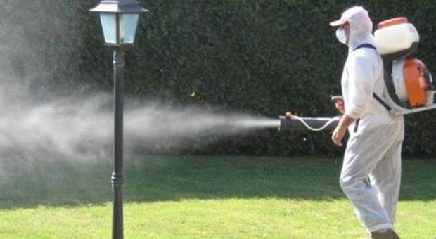 Febbre dengue, caso sospetto a Monza: scatta maxi-piano di disinfestazione