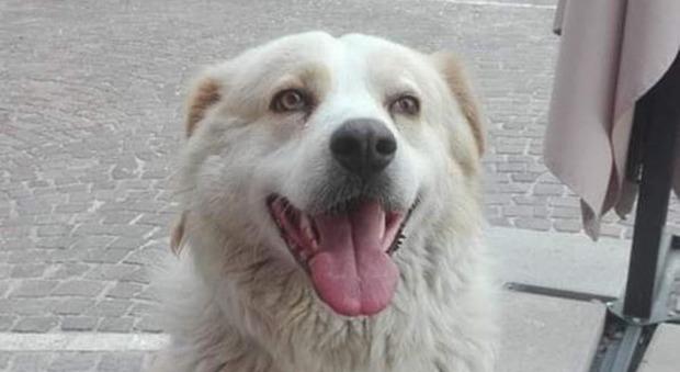 Il padrone muore per un infarto, il cane veglia sul corpo per 3 giorni: «Dignità che pochi umani hanno»