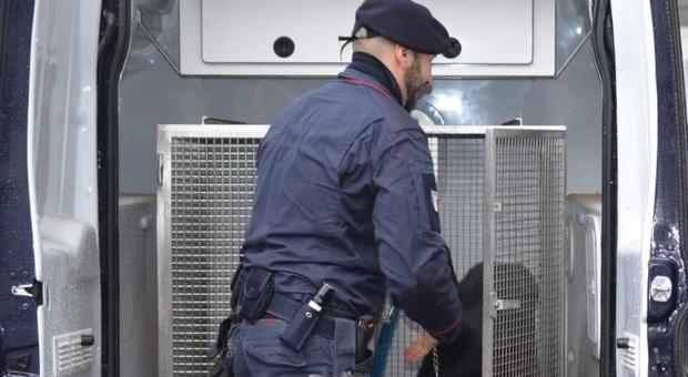 I carabinieri con i cani antidroga