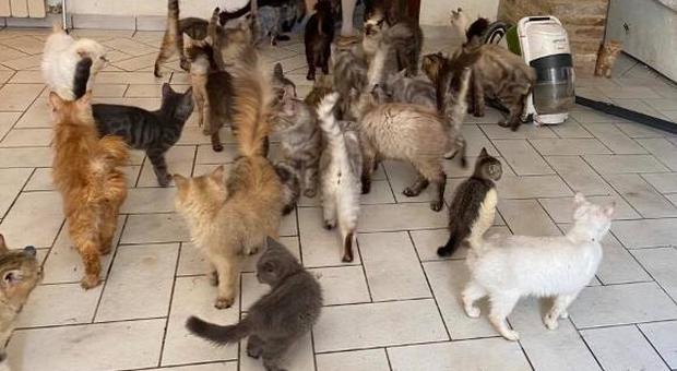 Trecastelli, settanta gatti denutriti e immersi nel degrado: animali sequestrati, proprietaria indagata per maltrattamenti