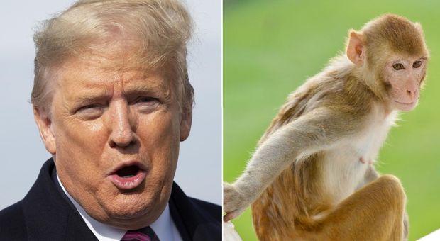Trump in India, allarme per la visita al Taj Mahal: «Rischio di attacchi di branchi di scimmie»