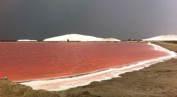 La salina rosa di Aigues-Mortes (foto di Office du Tourisme d'Aigues-Mortes)