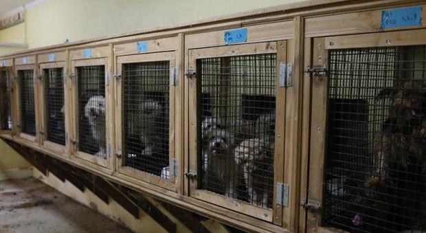 Stati Uniti, cuccioli morti e senza mandibola inferiore. Scoperto un altro canile degli orrori