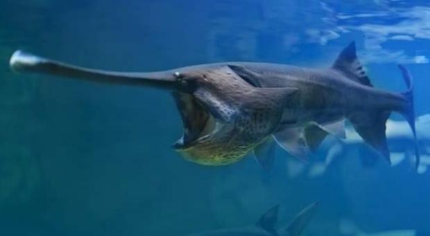Dichiarato estinto il Pesce spatola cinese (immagine pubblicata da Unilad)