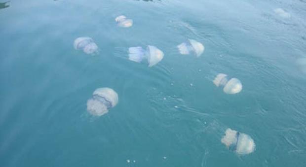 Punti dalle meduse? Ecco le cose da fare (e non fare)