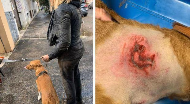 Roma, donna aggredita da un pitbull mentre era a passeggio col cane: «Poteva trasformarsi in tragedia»