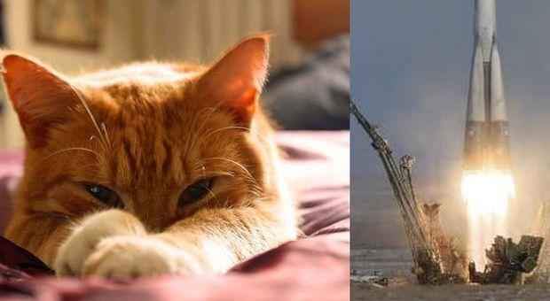 Ceneri di un gatto spedite per la prima volta nello spazio: il proprietario lancia una raccolta fondi