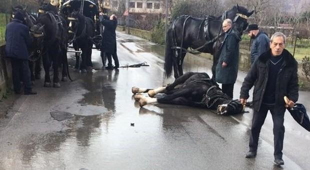 Funerale e matrimonio, muore un cavallo per i botti. Ed è corsa al lotto