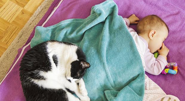 Gatto domestico uccide bimba di 9 mesi stendendosi su di lei: la piccola è morta soffocata