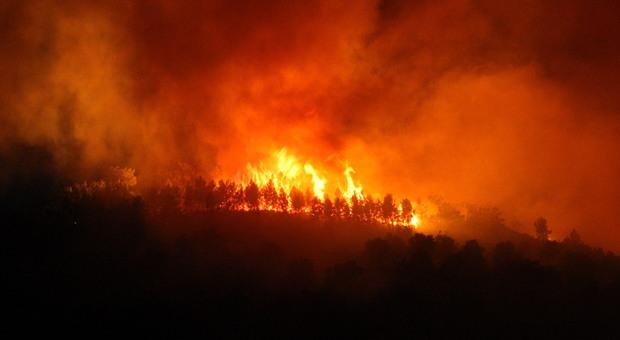 Violento incendio a Col Melon, nel territorio di Pedavena