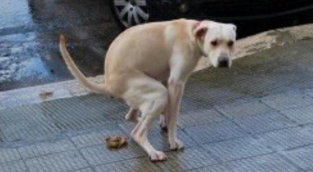 Tredicenne non raccoglie i bisogni dei cani, il passante li prende e glieli spalma in faccia