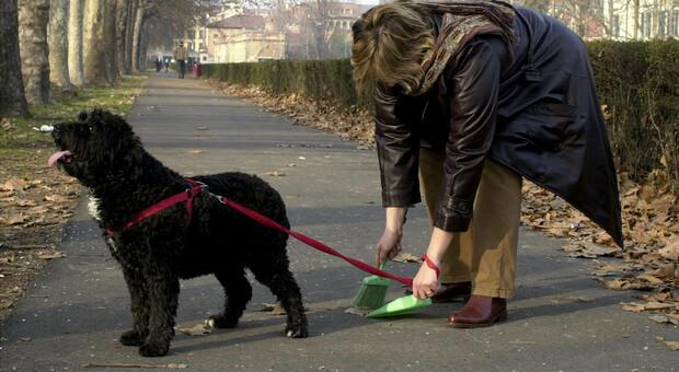 Escrementi di cane tappezzano le strade, un'anziana rischia di scivolare: presa al volo da un ragazzo