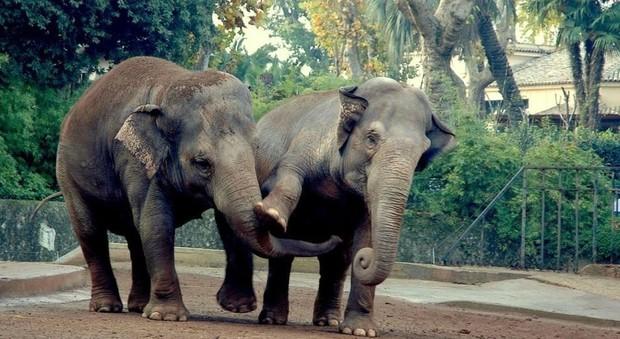 Gli elefanti del bioparco di Roma
