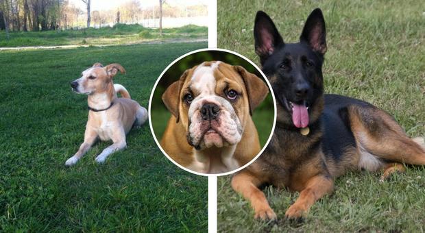 Cani, il falso mito dei sette anni rispetto all'età dell'uomo: ecco qual è la corrispondenza reale