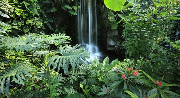 """Acqua minerale """"Amazon"""": imbottigliato il vapore dell'Amazzonia (a 70 euro a bottiglia)"""
