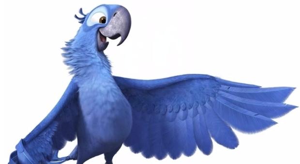 Estinto in natura il pappagallo blu di