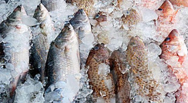 Pesce non a norma: sequestrati 100 chili e multa da 3.500 euro