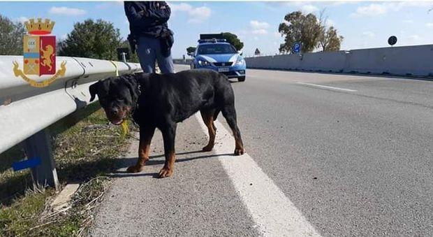 Lo sfortunato cane salvato dai poliziotti