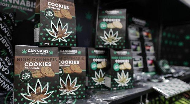 Cannabis light, gli esperti frenano: rischi per i più giovani
