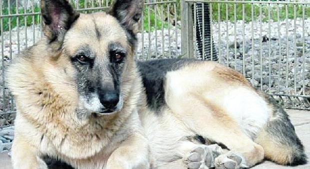 Cane adottato, dopo 12 anni Max ha trovato una casa