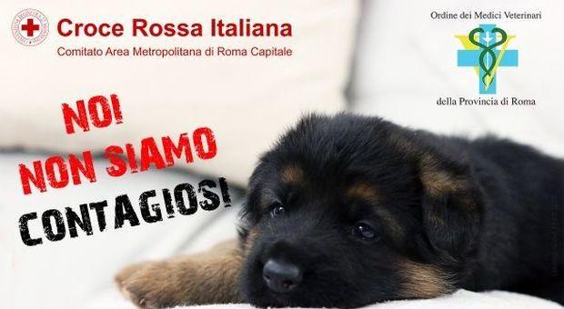 Coronavirus, primi abbandoni di cani di razzi. E parte la campagna: «Noi non siamo contagiosi»