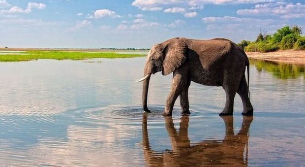 Safari: dal Kenya al Botswana, ecco dove i luoghi giusti