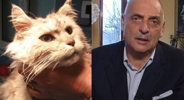 Paolo Brosio, il post per il suo gatto: «Pregate per Sushi, è da 13 anni con me»