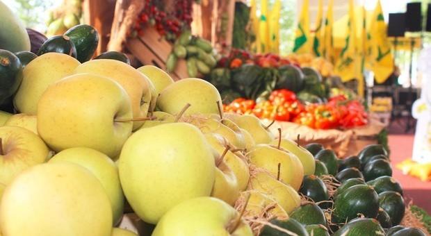 La ricerca: contro le rughe frutta e verdure fresche