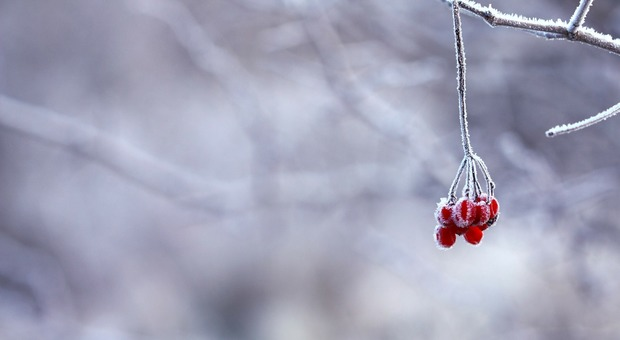 Meteo. Freddo polare a Nordest, in Alto Adige temperature da brivido: raggiunti i -15 gradi (Foto di kristamonique da Pixabay)