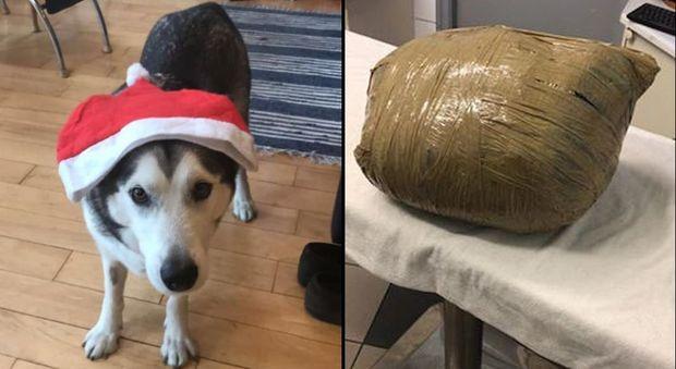 Lascia il cane in una pensione per tre giorni, lo ritrova morto e impacchettato (foto pubblicate dalla padrona, Kirsten Kinch, su Facebook)